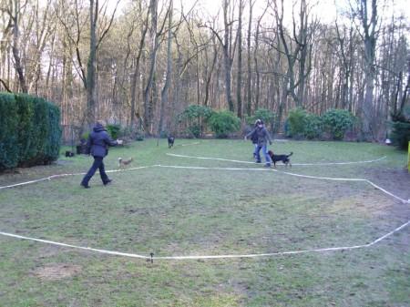 Mehrere Hunde gleichzeitig longieren am 2 Kreisen