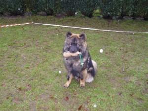 Futterbeuteltraining in der Hundeliebe Hundeschule