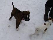 Junghundegruppe im Dezember