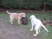 Welpen auf Entdeckung auf dem Hundeplatz
