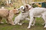 Hundespiel große Rassen
