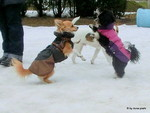 Spielgruppe Hundespiel