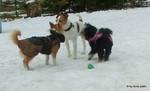 Hundespiel Freilauf